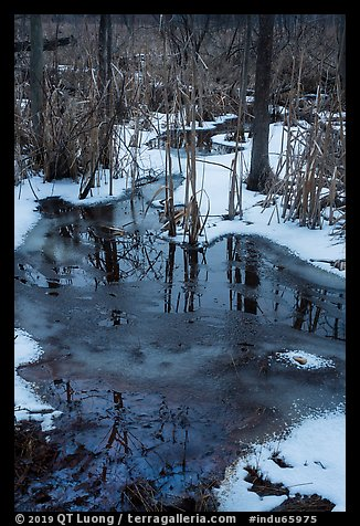 Reflections in partly thawed Great Marsh. Indiana Dunes National Park (color)