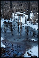Reflections in partly thawed Great Marsh. Indiana Dunes National Park ( color)