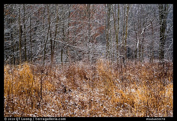 Prairie grasses and trees with fresh snow, Little Calumet River Trail. Indiana Dunes National Park (color)
