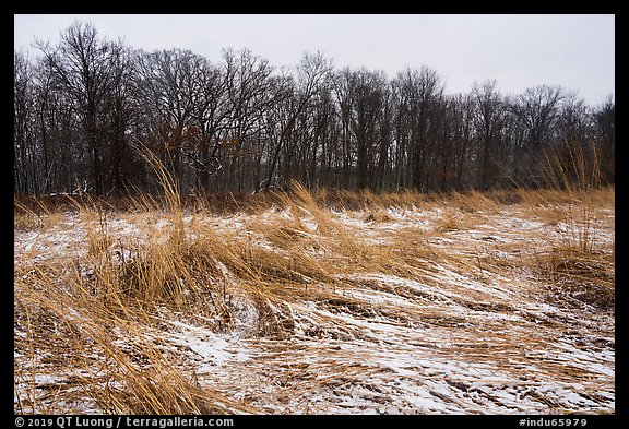 Mnokee Prairie in winter. Indiana Dunes National Park (color)