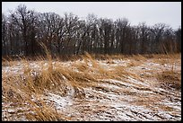 Mnokee Prairie in winter. Indiana Dunes National Park ( color)