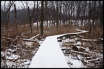 Snow-covered boardwalk, Little Calumet River Trail. Indiana Dunes National Park ( color)