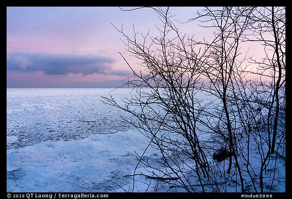 Bare branches and frozen Lake Michigan at dawn. Indiana Dunes National Park (color)