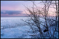 Bare branches and frozen Lake Michigan at dawn. Indiana Dunes National Park ( color)