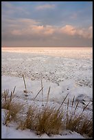 Dune grass and frozen Lake Michigan at sunrise. Indiana Dunes National Park ( color)