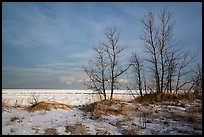 Dune grass, bare trees, and Lake Michigan. Indiana Dunes National Park ( color)