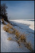 Grass on snowy dunes and frozen Lake Michigan at sunrise. Indiana Dunes National Park ( color)