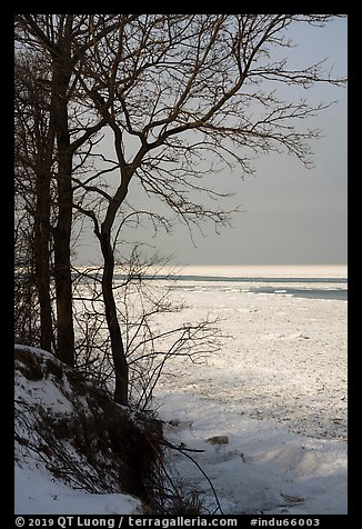 Bare trees and Frozen Lake Michigan. Indiana Dunes National Park (color)