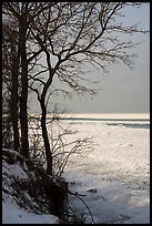 Bare trees and Frozen Lake Michigan. Indiana Dunes National Park ( color)