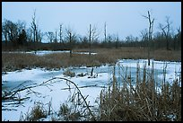 Great Marsh at dusk in winter. Indiana Dunes National Park ( color)