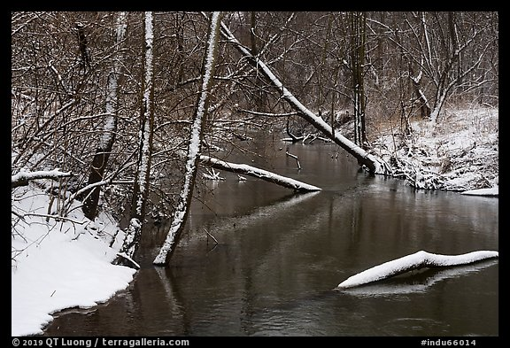 Snowy tree trunks spanning Little Calumet River, Heron Rookery. Indiana Dunes National Park (color)