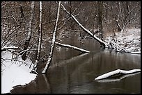 Snowy tree trunks spanning Little Calumet River, Heron Rookery. Indiana Dunes National Park ( color)
