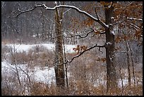 Forest and wetlands with fresh snow,. Indiana Dunes National Park ( color)