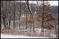 Trees and shrubs with fresh snow,. Indiana Dunes National Park ( color)