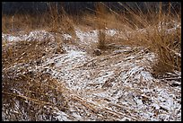 Grasses with fresh snow, Mnoke Prairie. Indiana Dunes National Park ( color)