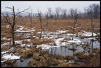 Cowles Bog in the rain, winter. Indiana Dunes National Park ( color)