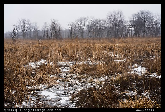 Cowles Bog in winter. Indiana Dunes National Park (color)