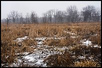 Cowles Bog in winter. Indiana Dunes National Park ( color)