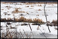 Frozen surface of Cowles Bog. Indiana Dunes National Park ( color)