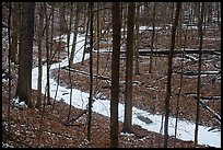 Frozen stream in ravine near Chellberg Farm. Indiana Dunes National Park ( color)