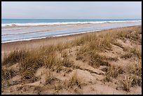 Grasses, dunes, and beach in winter. Indiana Dunes National Park ( color)