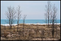 Bare trees and Lake Michigan in winter. Indiana Dunes National Park ( color)