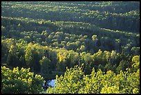 Forest seen  from Mount Franklin. Isle Royale National Park ( color)