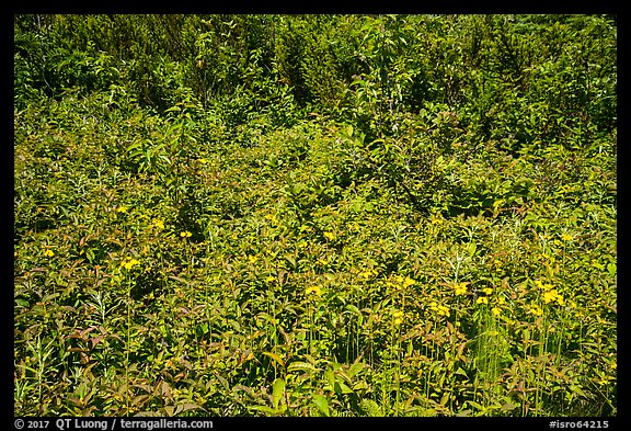 Dense summer vegetation, Passage Island. Isle Royale National Park (color)