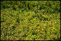 Dense summer vegetation, Passage Island. Isle Royale National Park ( color)
