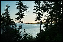 Islands through trees from Tookers Island, late afternoon. Isle Royale National Park ( color)