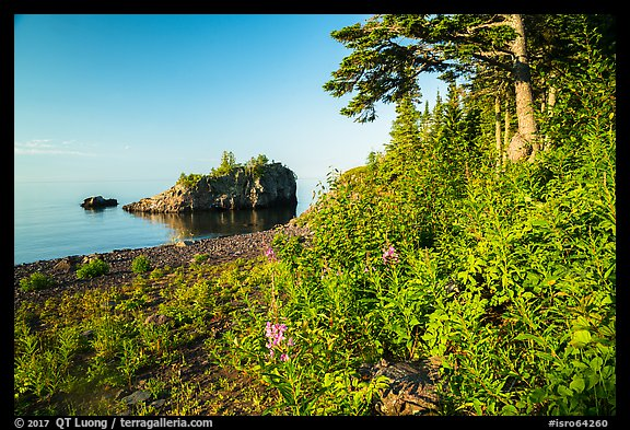 Wildflowers, offshore islet, and Lake Superior, Mott Island. Isle Royale National Park (color)