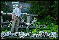 Rolf Peterson points to speciment of moose skull exhibiting pathology. Isle Royale National Park ( color)