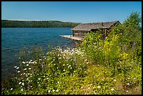 Fish House and wildflowers, Edisen Fishery. Isle Royale National Park ( color)