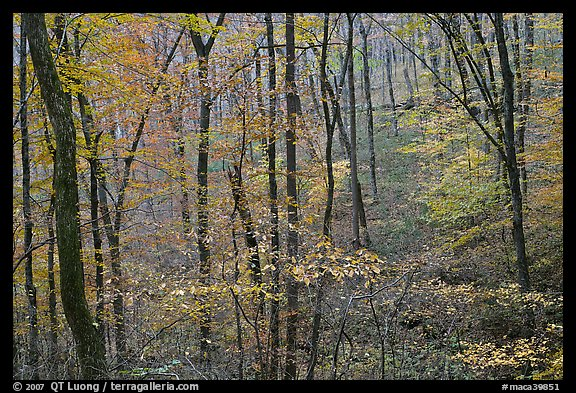 Forest in fall color. Mammoth Cave National Park (color)