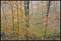 Drizzle and fall colors. Mammoth Cave National Park, Kentucky, USA.