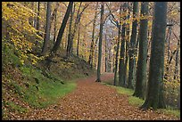 Trail covered with fallen leaves. Mammoth Cave National Park ( color)