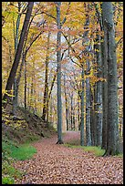 Trail in autumn forest. Mammoth Cave National Park ( color)