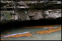 Styx resurgence and limestone ledges. Mammoth Cave National Park ( color)
