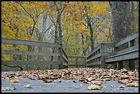 Fallen leaves and boardwalk, ground-level view. Mammoth Cave National Park ( color)