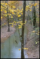 Trees with yellow leaves and Styx river during rain. Mammoth Cave National Park ( color)