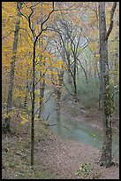 Styx stream and forest in fall foliage during rain. Mammoth Cave National Park ( color)