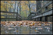 Wet boardwalk during rain. Mammoth Cave National Park ( color)