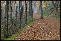 Trail with fallen leaves. Mammoth Cave National Park ( color)