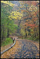 Paved trail and forest in fall foliage. Mammoth Cave National Park, Kentucky, USA.
