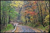 Trail leading to historic cave entrance in the fall. Mammoth Cave National Park ( color)