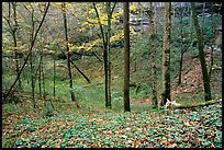Forest in fall inside sinkhole. Mammoth Cave National Park ( color)