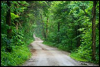 Dennison Ferry Road. Mammoth Cave National Park ( color)