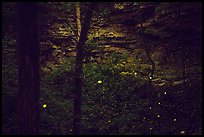 Fireflies and sinkhole. Mammoth Cave National Park ( color)