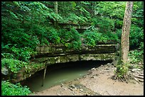 River Styx resurgence in summer. Mammoth Cave National Park ( color)