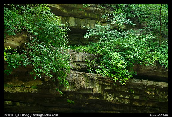 Limestone ledges with summer wildflowers. Mammoth Cave National Park (color)